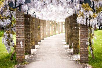 Allée de fleurs dans un cimetière